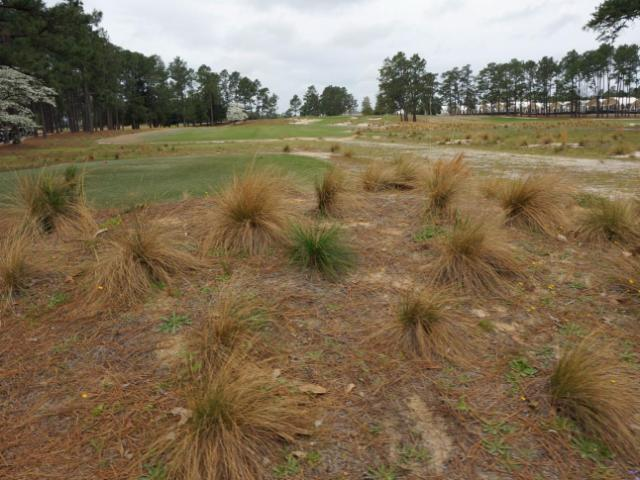 Wire grass is on display throughout the Pinehurst No. 2 course as part of the renovations for the US Open.<br/>Photographer: Greg Clark