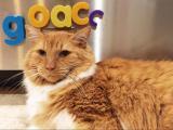 ACC Pick'n Kitten