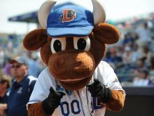 Wool E. Bull